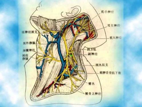 枕大神经卡压综合征