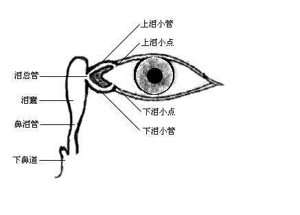 眼泪是如何流到鼻腔的