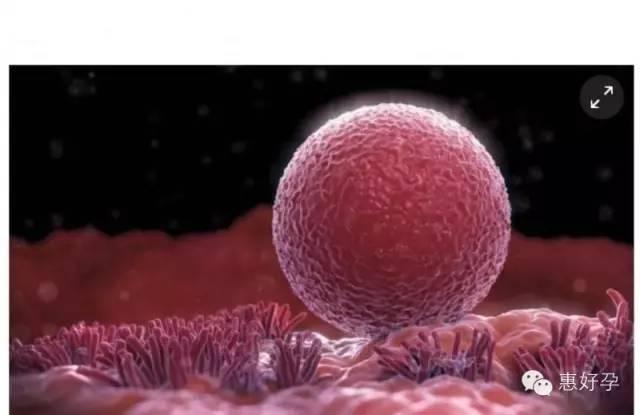 排卵诱导药物