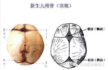 脑颅骨三维高清结构图