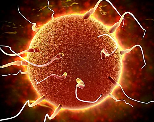 精子体内存活多久_精卵结合需要几天 精子和卵子结合需要多长时间_有来医生