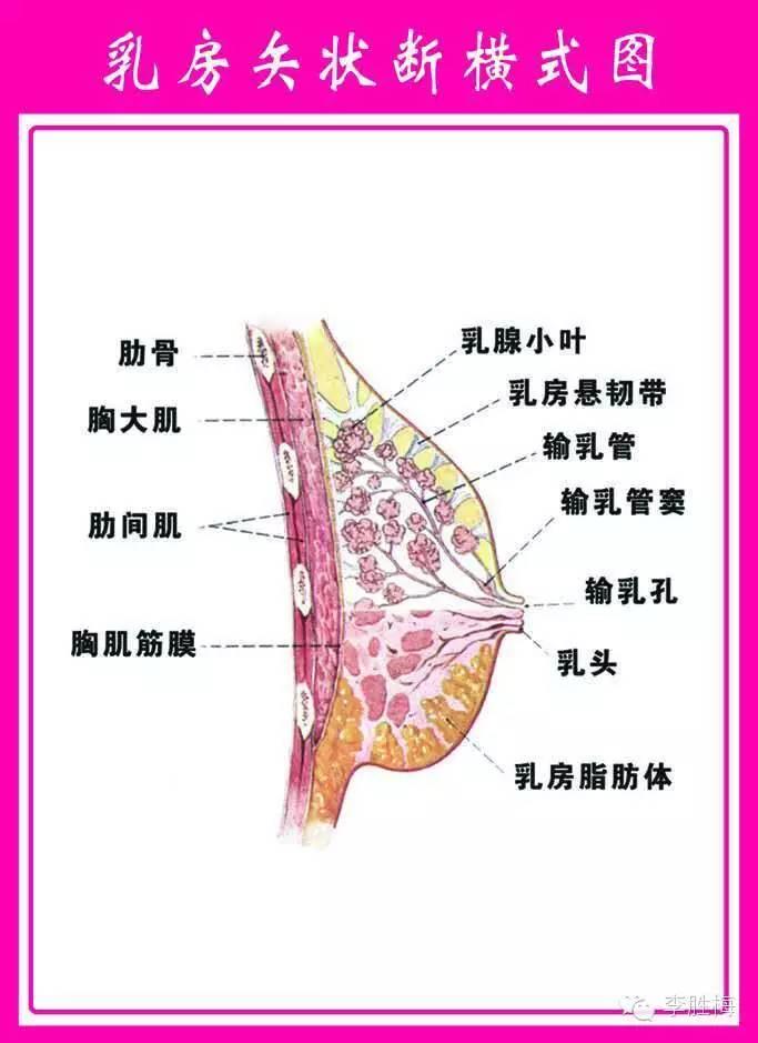 女性常见的乳房疾病