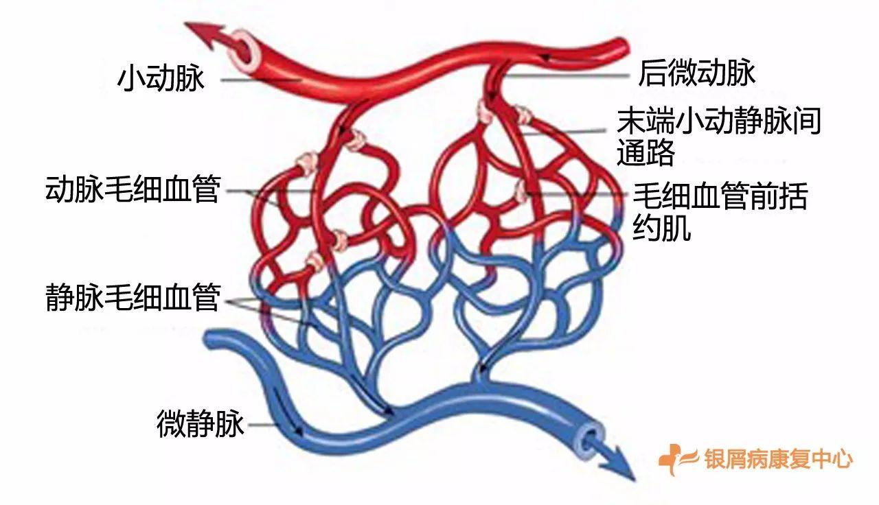 但表现最明显的血液问题其实是血液的微循环问题.图片