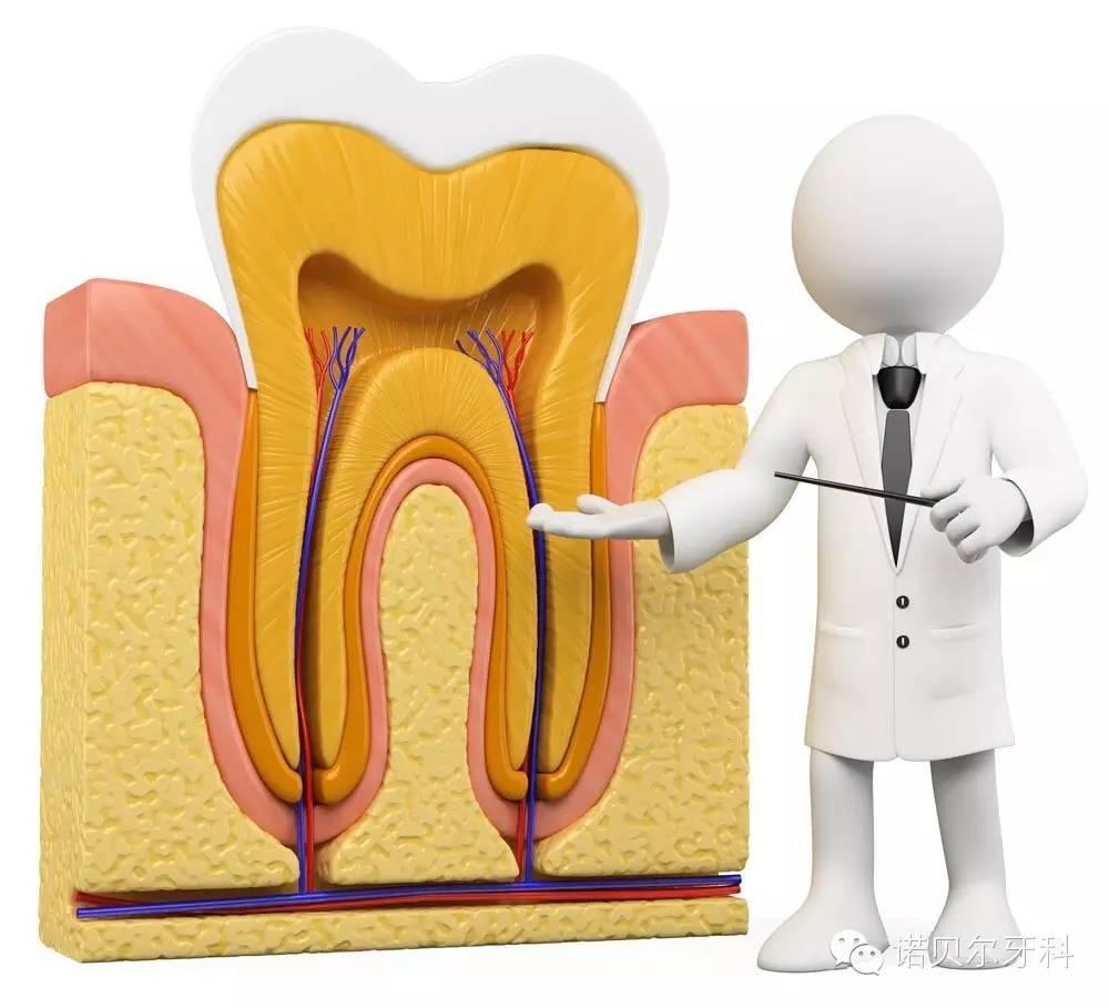 2、术后护理 任何一种修复方法,要想保持的长久都离不开治疗后患者自身的护理工作。术后要对种植牙进行特别的护理: 术后24小时内进流食,不能刷牙以免刺激伤口。 在拆线后的3~6个月内,注意保护人工牙根,不能用它用力咀嚼。 3、特殊护理 种植牙有类似天然牙的牙体与牙周关系,有必要对种植牙的周围进行特殊的种植体洁治和周围天然牙进行常规洁治。从而维持种植牙的长期稳定。而且要注意与邻牙之间区域的卫生,以防邻牙发生龋坏。