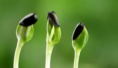 """春季养生要多吃这些""""芽"""""""