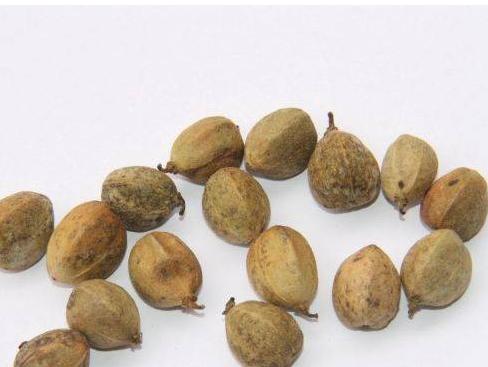 中药巴豆的作用_中医 中药大全 泻下药 巴豆   很多人对于巴豆的认识,都源自于古装剧