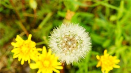 热文:常见的白癜风治疗方法有哪些