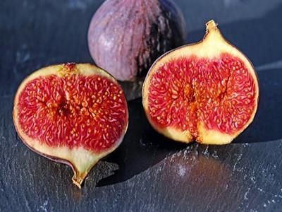 figs-1620590__340_副本.jpg